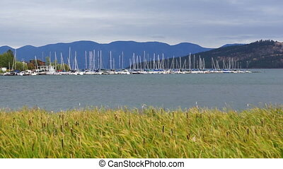 Flathead Lake Cattails Wind Whipping Marina Sailboats...