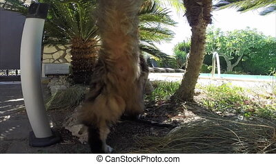 Cat Smelling The Camera - Curious longhair cat in the garden...