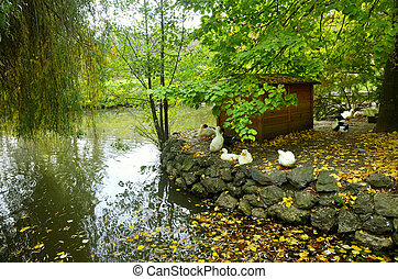 Autumnal scene with yellow, ducks under the willow tree.