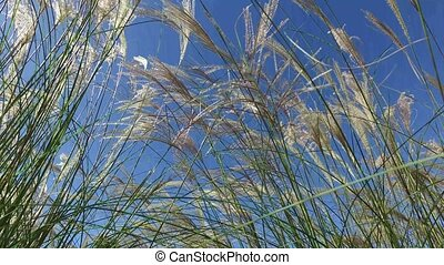 Close up shot of grass swaying gently in the wind against...