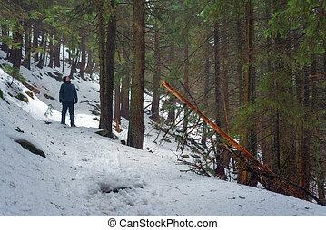 tree - winter fir tree forest closeup