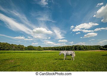 Landscape with Grizzle Horse - Summer landscape with grizzle...