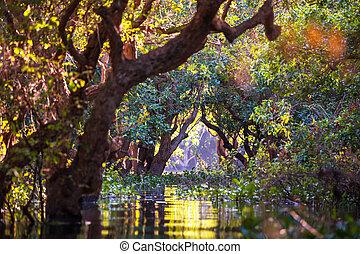 Mangroves in Cambodia - Flooded trees in mangrove rain...