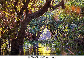Mangroves in Cambodia