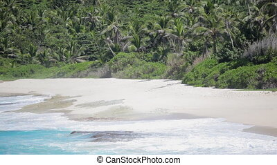 natural sandy beach with palmtrees - waves on natural sandy...