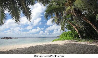 shady beach - deserted shady beach with palmtrees