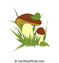 Boletus on a white background - Boletus isolated over white...