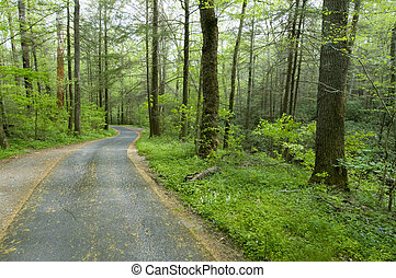 Country Road - Forest Road, Roaring Forks Motor Nature...