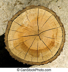 Cut Log - Cut log, woodgrain background texture