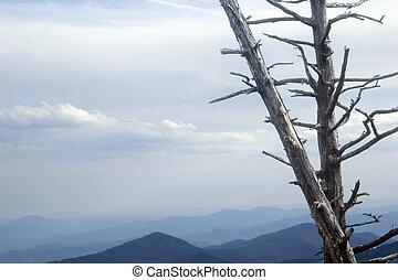 Blue Ridge Mountains - Moutain landscape showing dead tree...
