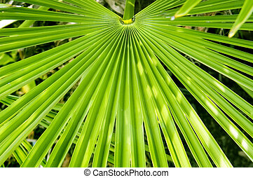 Palm Frond - Palm frond Background