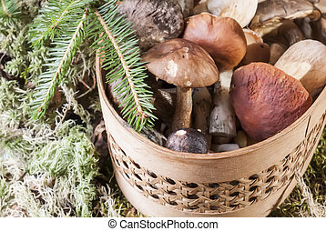 Mushrooms in the basket standing on the moss in the forest -...