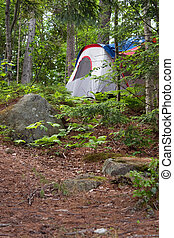 Forest Tent Camping - A tent on a heavily wooded camp site...