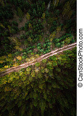 Road in the forest. Aerial view.