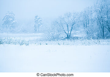 Winter snowy trees background - Winter snowy trees landscape...