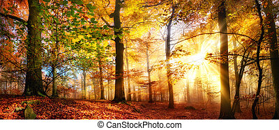 Gold sunrays in a misty autumn forest