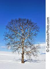 Alone frozen tree in field