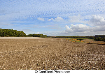 yorkshire wolds agriculture - harvested fields in scenic...