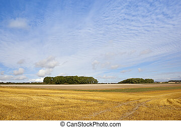 copse and stubble field - two small copses with hedgerows...