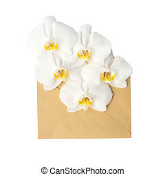 flowers in the envelope, isolated on white - Orchid in the...