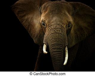 黑色, 針對, 背景, 大象