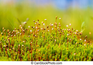 Closeup of green sphagnum moss in the swamp.