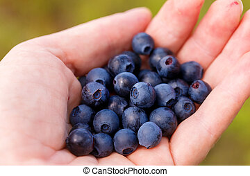 Hand Holding Fresh Picked Blueberries