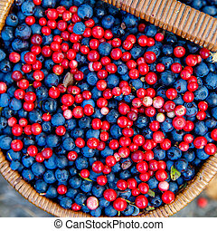 Basket of bilberry and cowberry in the forest near the tree...