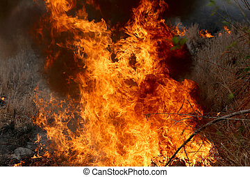 Summer wildfires burning in the Forest at rural area of Khon...