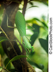 Praying mantis camouflaged - Camouflaged praying mantis in...