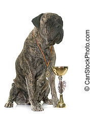 bull mastiff and cup in front of white background