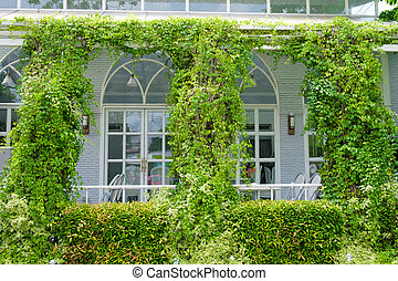 store front with green ivy