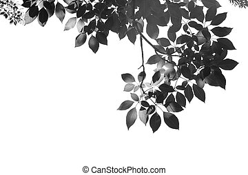 black leafs in summer on blue sky with burst light