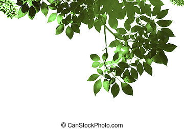 Green leafs in summer on blue sky with burst light