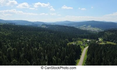 Aerial road pine forest - Aerial road in the pine forest...