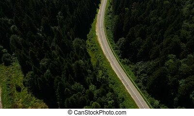 Aerial Black Car Moving on the Road in the Pine Forest...