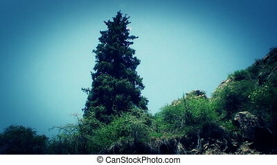 the top of the mountain, the trees and bushes on the rocks -...