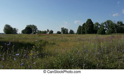 russian summer field with trees view - russian summer field...