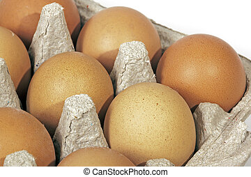 Studio Shot Close Up of Packaged Chicken Eggs