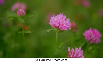 wild flowers close up