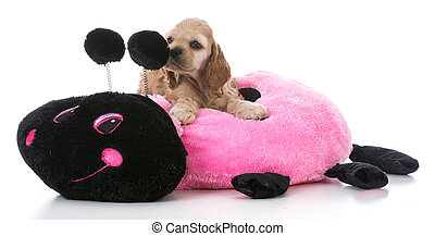 puppy on dog bed - american cocker spaniel puppy on a dog...