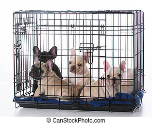 puppies in a crate