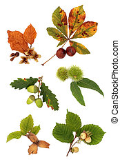 Autumn Nut Collection - Acorn, hazelnut, beech, chestnut and...