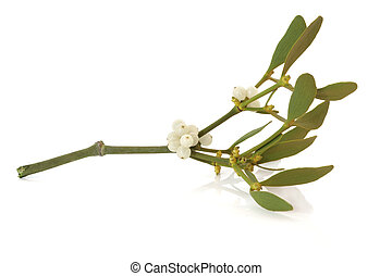 Mistletoe Leaf Sprig with Berries - Mistletoe leaf and berry...