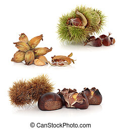Wild Nuts - Wild nuts of hazelnut, chestnut and beech with...