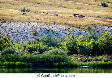 Bank of Don river in Donskoi national park with cows graze...
