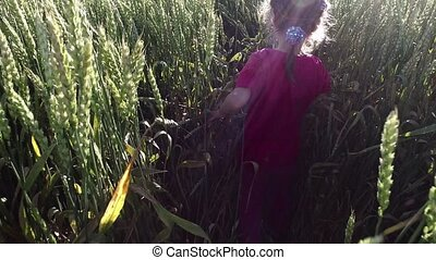 Girl child walks on the wheat field. Wheat born a tall and...