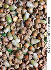 acorns background