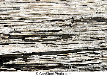 Old Wood of Ponderosa Pine - Wood grain pattern of weathered...