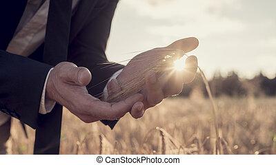 領域, 人, 小麥,  sunburst, 手